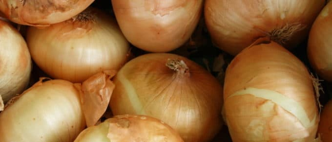 Close up of some onions